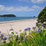 Im Norden unterwegs- Neuseeland Tagebuch Teil 2