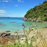 Milford Sound & Stewart Island- Neuseeland Tagebuch Teil 8