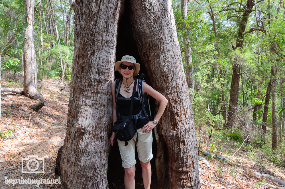 Australien, Fraser Island Valley of Pines