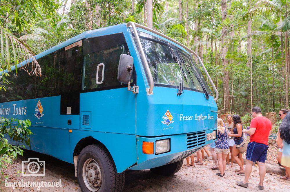 Australien Fraser Island Cool Dingo Tour
