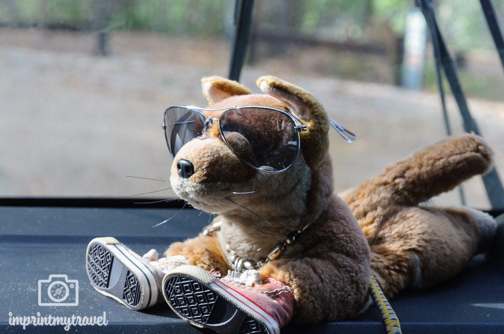 Australien, Fraser Island, Cool Dingo Maskottchen