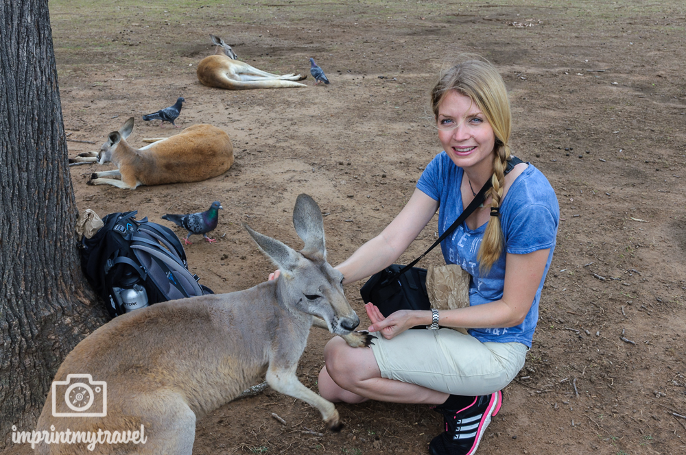 Australien, Brisbane, Lone Pine Koala Sanctuary