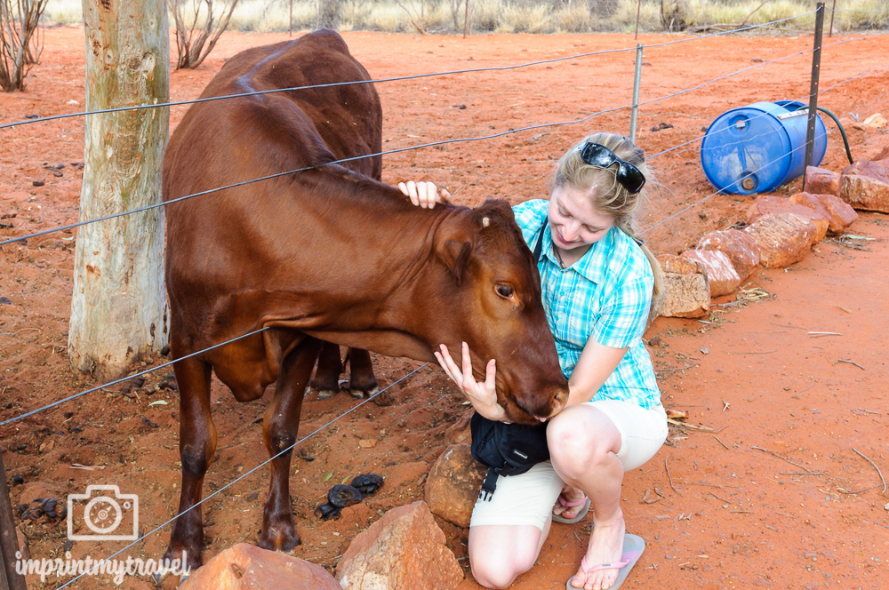 Outback Australien: Kuh Molly
