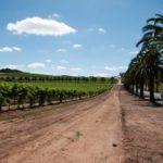 Ausflug nach Adelaide & Barossa Valley