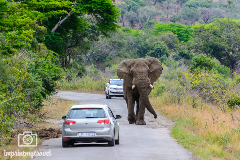 Südafrika Sehenswürdigkeiten Hluhluwe Elefant