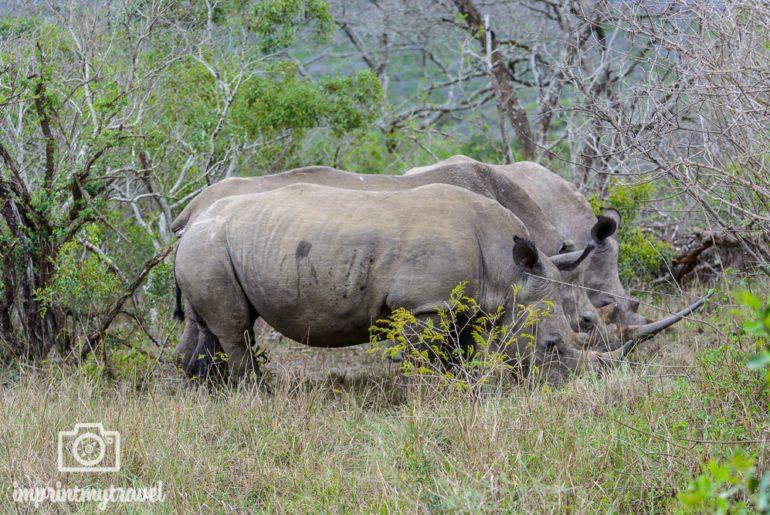 Südafrika Sehenswürdigkeiten Hluhluwe Nashörner