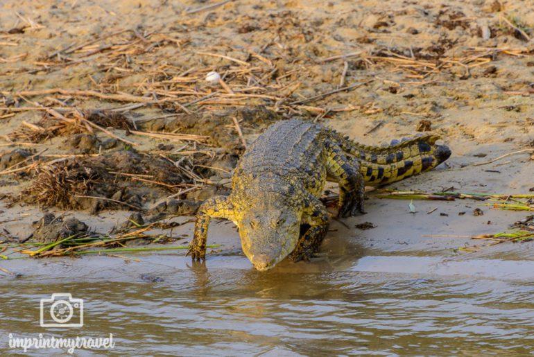 Südafrika Sehenswürdigkeiten iSimangaliso Wetland Park