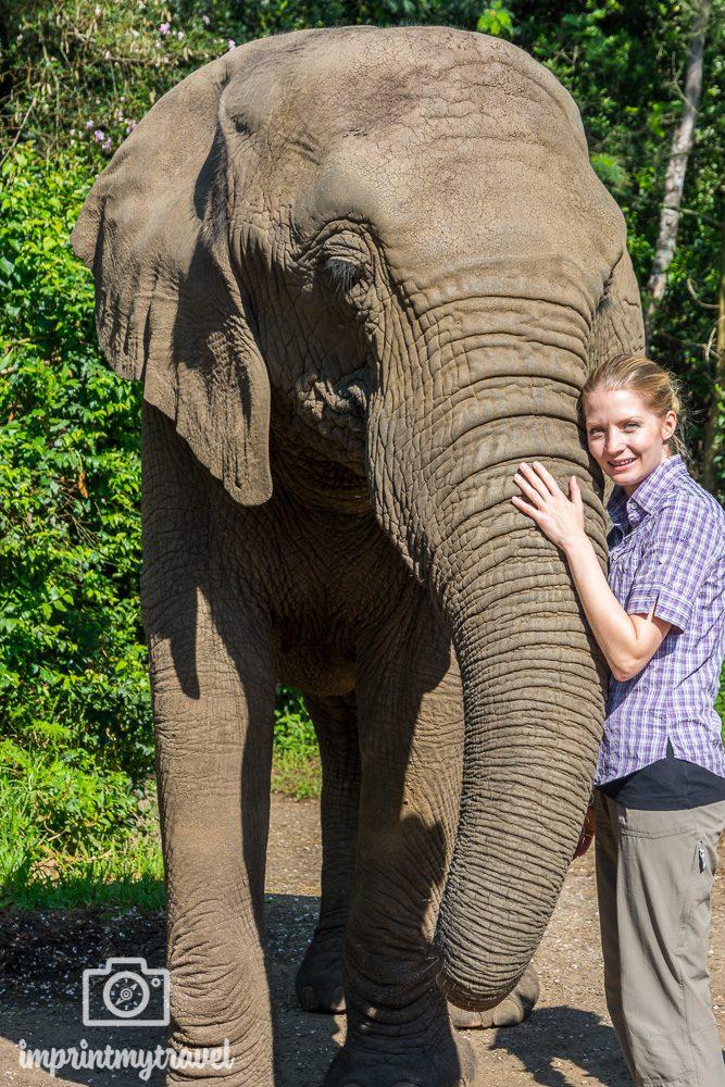 Südafrika Sehenswürdigkeiten Elephant Sanctuary Plettenberg Bay