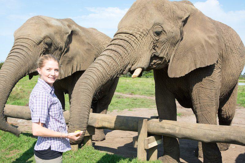 Elephant Sanctuary Plettenberg Bay
