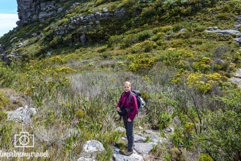 Südafrika Sehenswürdigkeiten Tafelberg