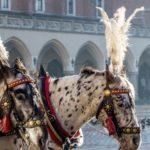 Top 8 Sehenswürdigkeiten in Krakau – Reiseführer