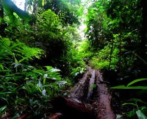 Der schmale Pfad durch den Dschungel
