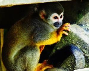 Einer der vielen süßen Affen