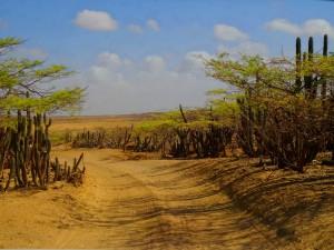 Die unbefestigte Straße zurück in die Zivilisation