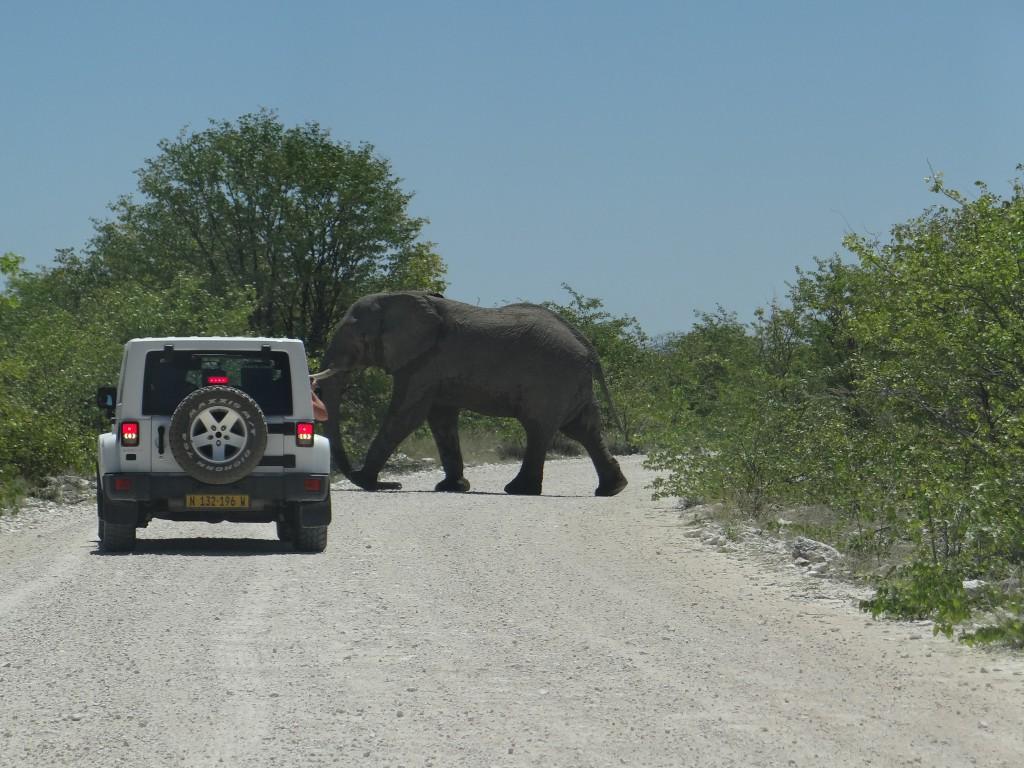 namibia_safari_etosha