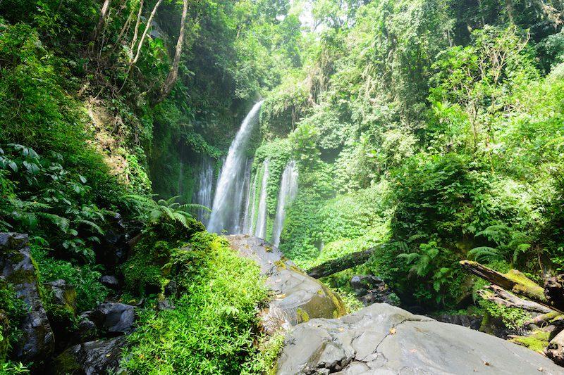 Lombok: Lombok Dschungel