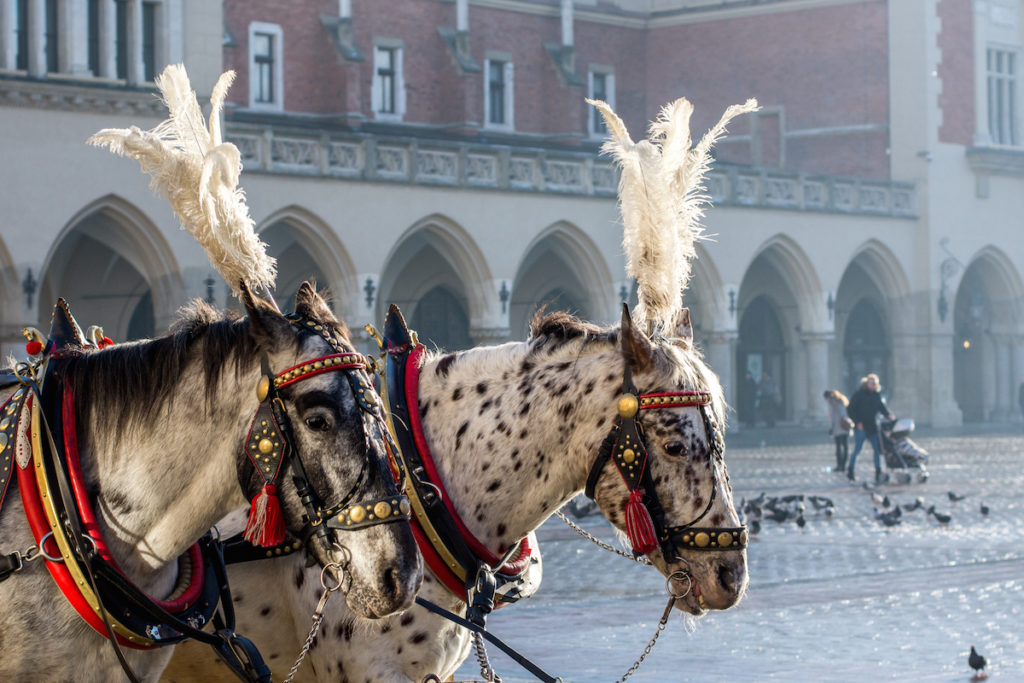 horses (1 von 1) Kopie