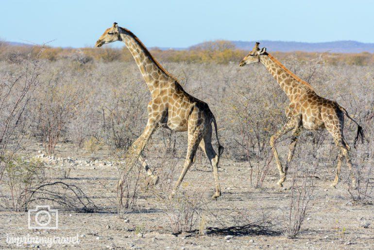 Safari Fotografie Bewegung