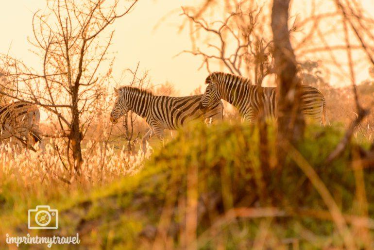 Fotografieren auf Safari Licht