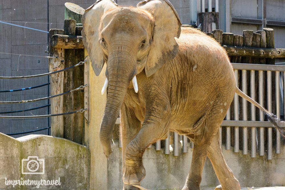Üben für das Fotografieren auf Safari: Tiergarten Schönbrunn