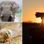 Fotografieren auf Safari- was musst du beachten