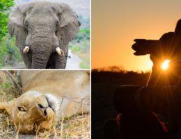 Fotografieren auf Safari Tipps
