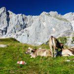 Urlaub in Österreich- Wandern in der Schladming-Dachstein Region