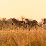 Abenteuer Afrika- Rundreise Namibia, Botswana & Victoria Falls