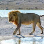 Safari in Namibia: Der Etosha Nationalpark