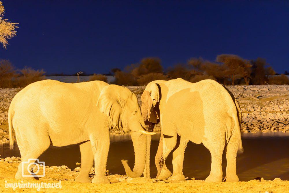 Etosha Nationalpark: Elefanten