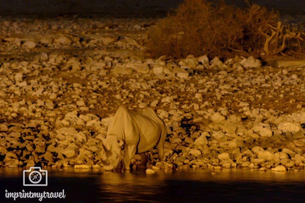 Etosha Nationalpark: Spitzmaulnashorn