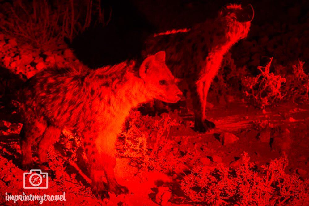 Etosha Nationalpark: Nachtpirschfahrt