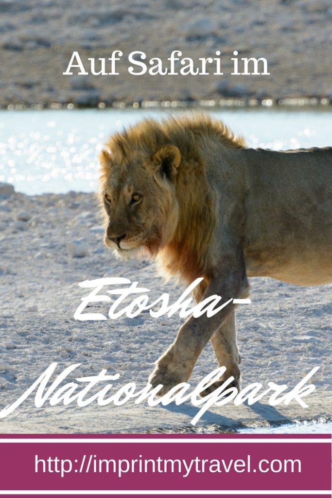Auf Safari im Etosha- Nationalpark meine Tipps zur Planung