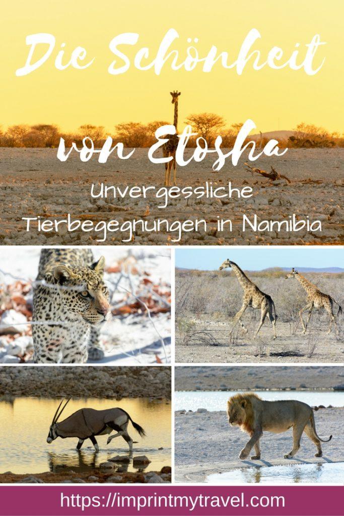 Safari im Etosha Nationalpark Namibia: alles was du für Reiseplanung und Vorbereitung einer unvergesslichen Safari in Namibia wissen musst!