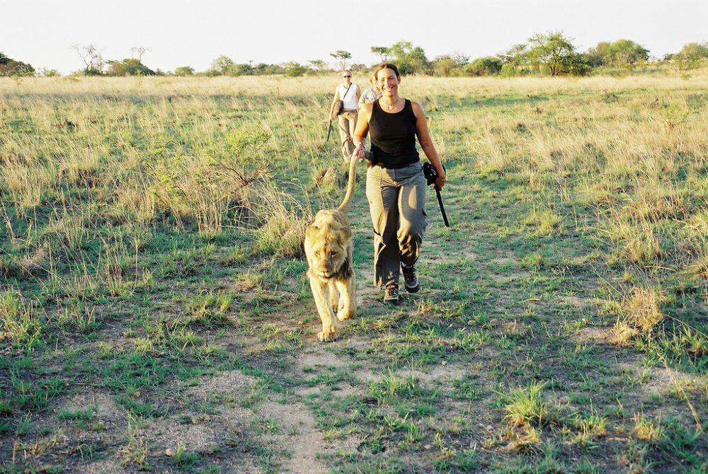 Tierschutz auf Reisen: Lion Walks