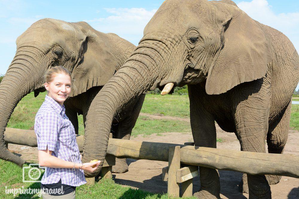 Tierschutz auf Reisen: Elephant Encounters