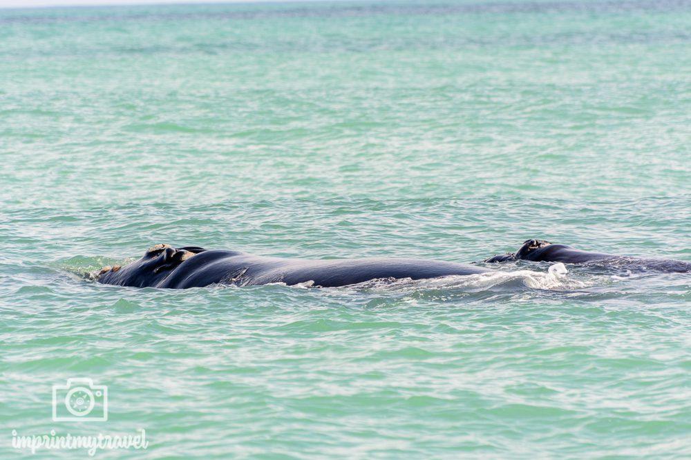 Tierschutz auf Reisen: Whale Watching