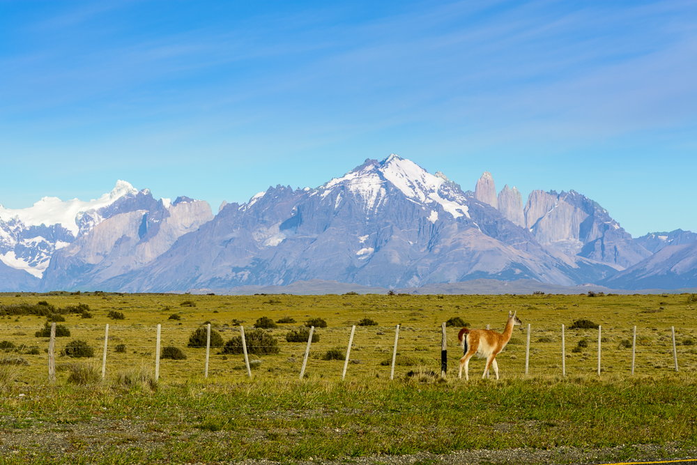 Patagonien Highlights Torres del Paine
