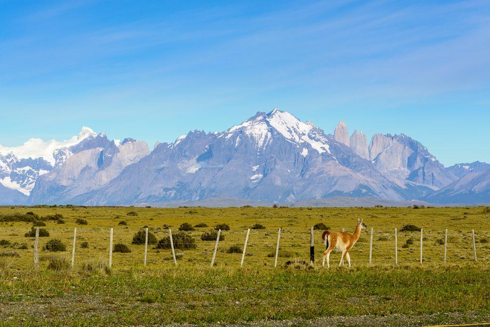 Patagonien Highlights Torres del Paine