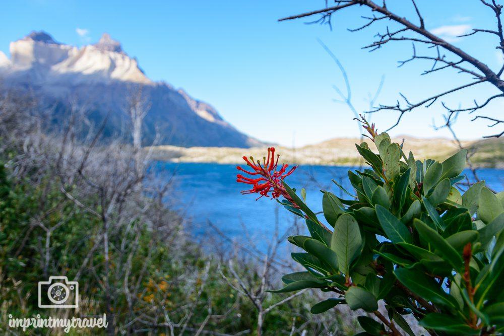 Patagonien Bilder: Valle Frances Trekking