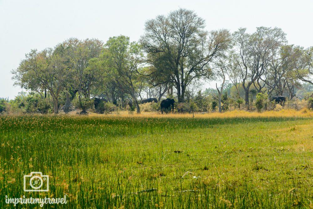 Okavango Delta Safari: Elefanten