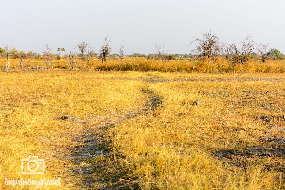 Okavango Delta Safari: zu Fuß auf der Pirsch