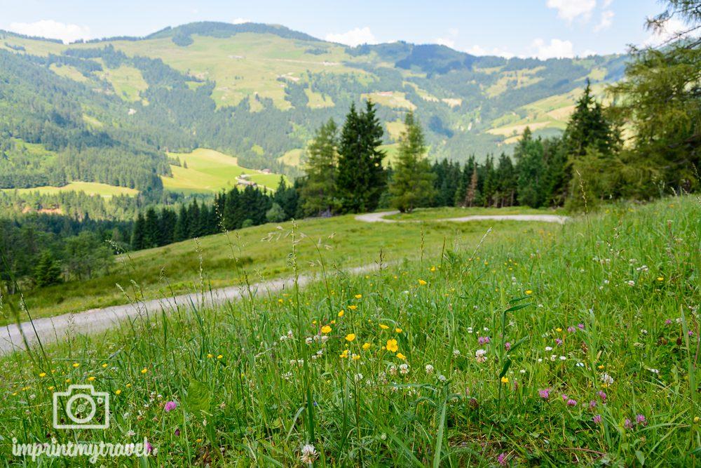 KAT Walk Kitzbüheler Alpen Tirol Forststraße