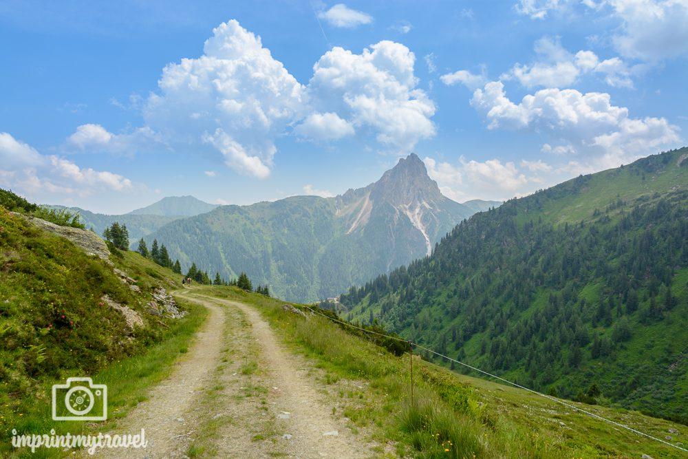 Wandern in den Kitzbüheler Alpen Forstweg
