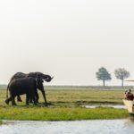 Safari im Chobe Nationalpark – Im Reich der Elefanten