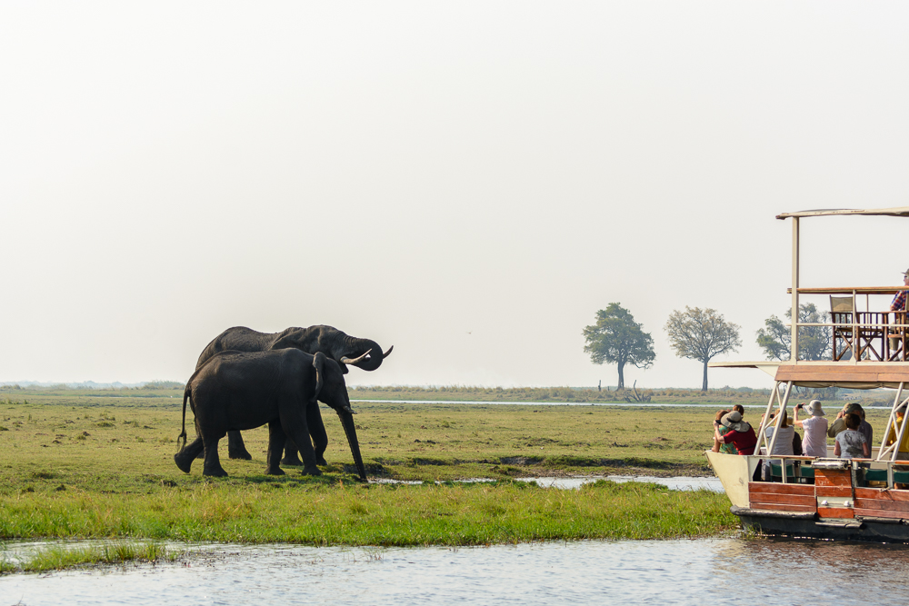 Safari im Chobe Nationalpark Botswana River Cruise