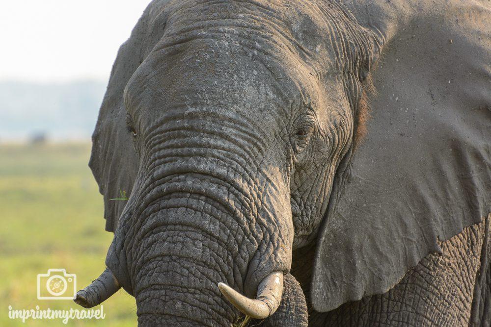 Objektiv Vergleich Telezoom Elefant