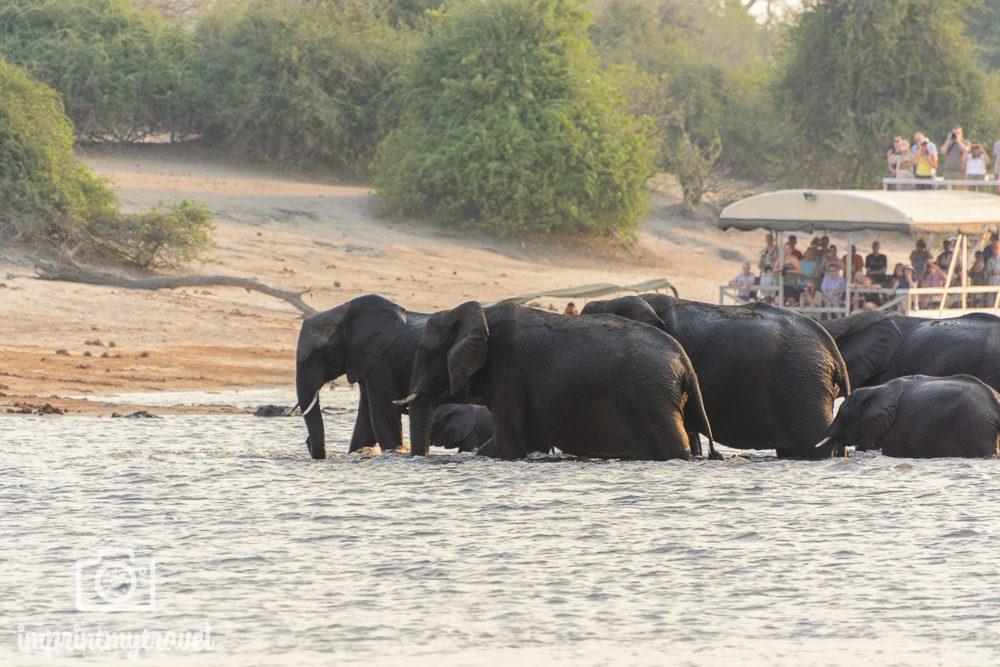 Safari im Chobe Nationalpark Elefanten