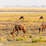 Safari im Chobe Nationalpark