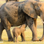 Safari im Chobe Nationalpark